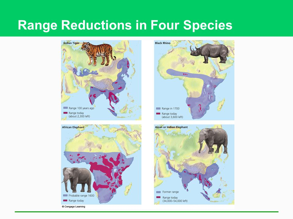 Range Reductions in Four Species