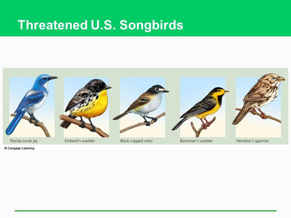 Threatened U.S. Songbirds