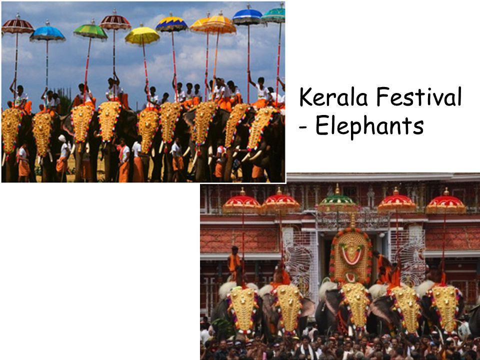 The Elephants are an integral part of the daily life in Kerala, Kerala has more than seven hundred elephants in captivity.