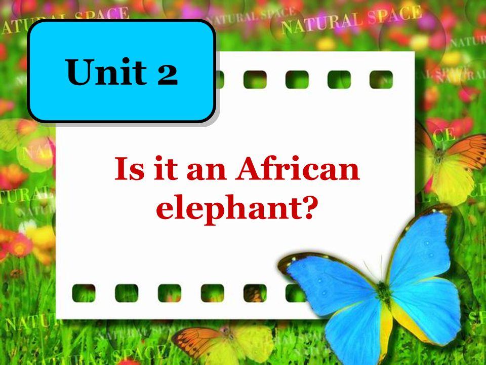 完成句子,一空多词。 1.一些亚洲象在森林里工作。 Some _____________ work _________.