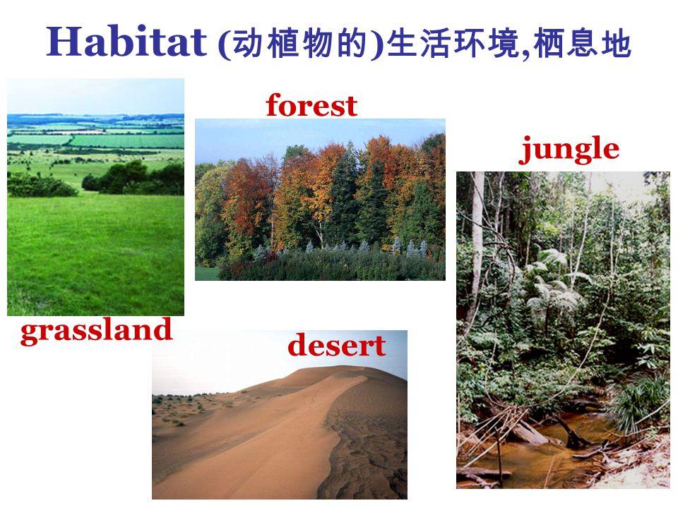 Habitat ( 动植物的 ) 生活环境, 栖息地 grassland forest desert jungle