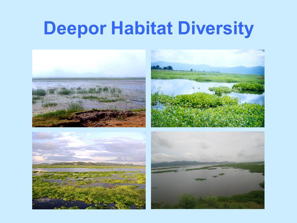 Deepor Habitat Diversity