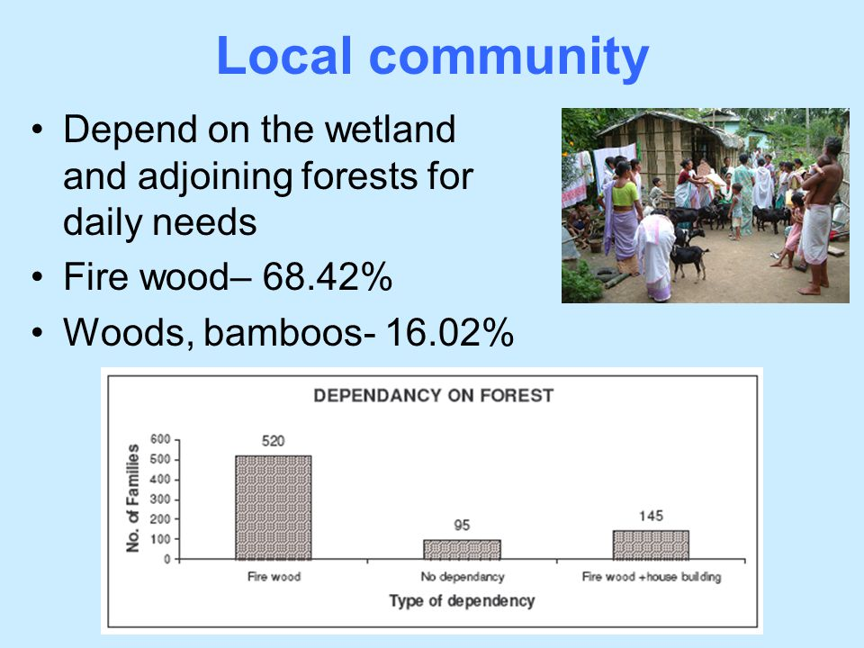Depend on the wetland and adjoining forests for daily needs Fire wood– 68.42% Woods, bamboos- 16.02% Local community