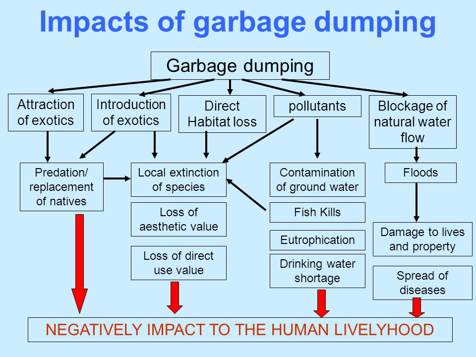 Impacts of garbage dumping Garbage dumping Blockage of natural water flow Contamination of ground water Direct Habitat loss Attraction of exotics poll
