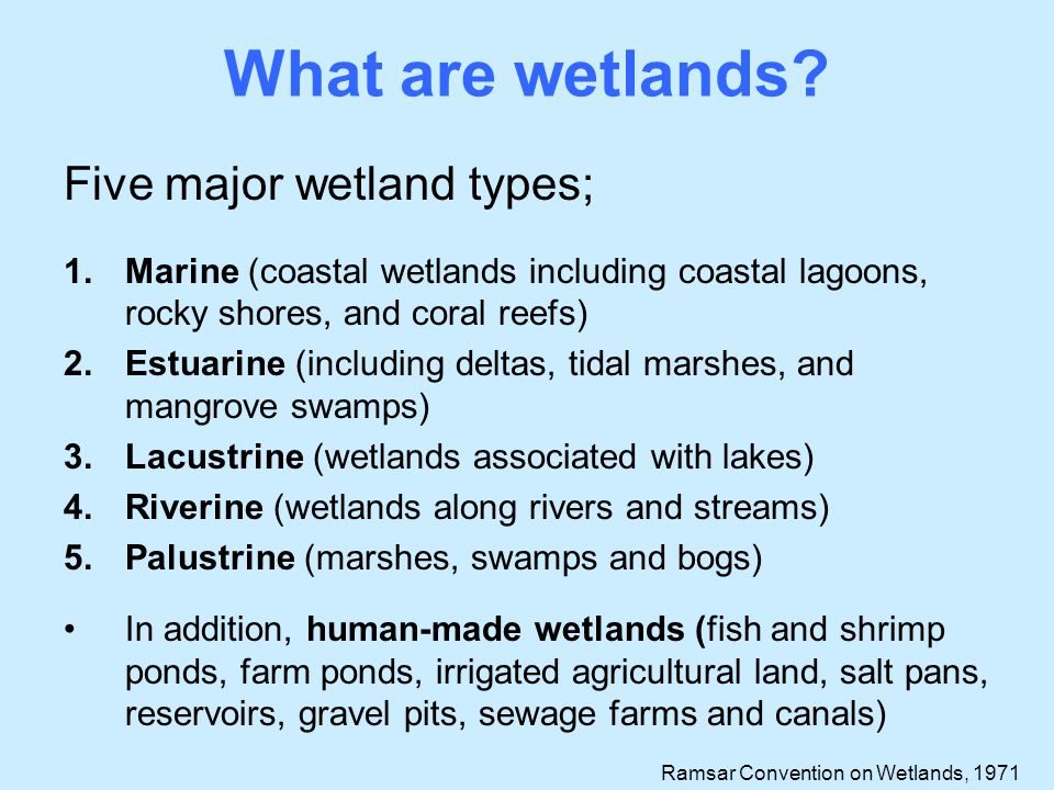 What some people think about wetlands.