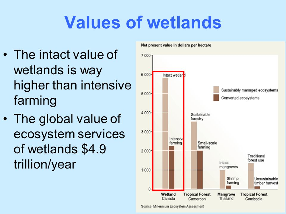Values of wetlands The intact value of wetlands is way higher than intensive farming The global value of ecosystem services of wetlands $4.9 trillion/