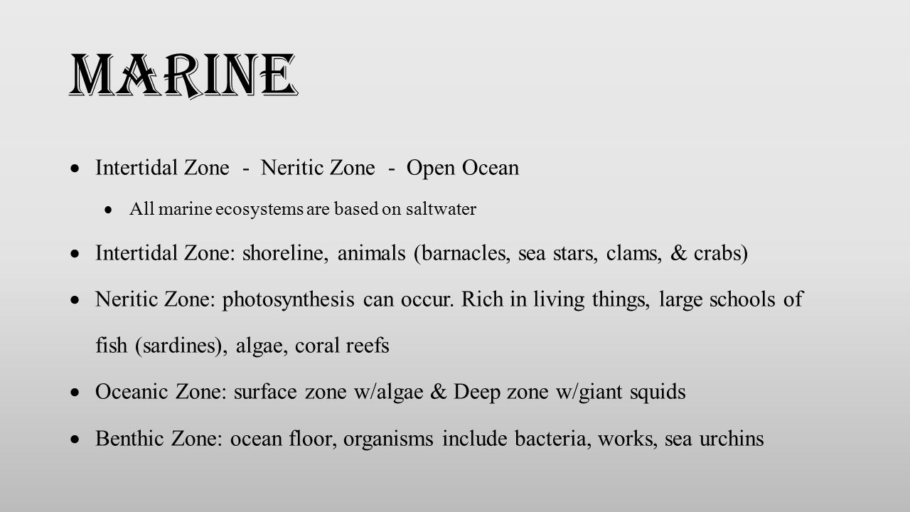  Intertidal Zone - Neritic Zone - Open Ocean  All marine ecosystems are based on saltwater  Intertidal Zone: shoreline, animals (barnacles, sea sta