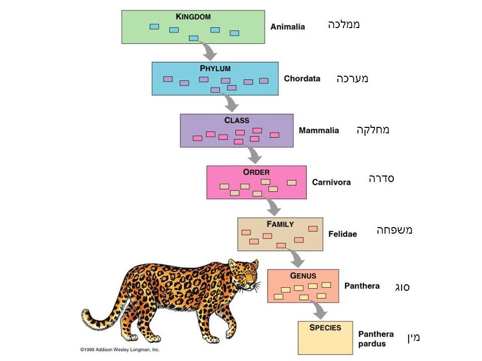 ממלכה מערכה מחלקה סדרה משפחה סוג מין