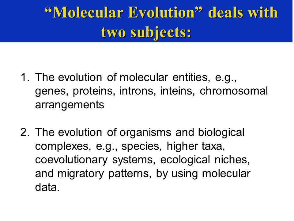 1.The evolution of molecular entities, e.g., genes, proteins, introns, inteins, chromosomal arrangements 2.