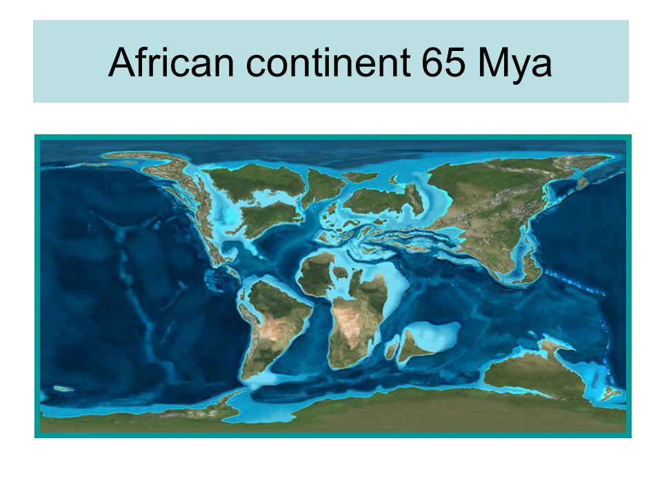 African continent 65 Mya