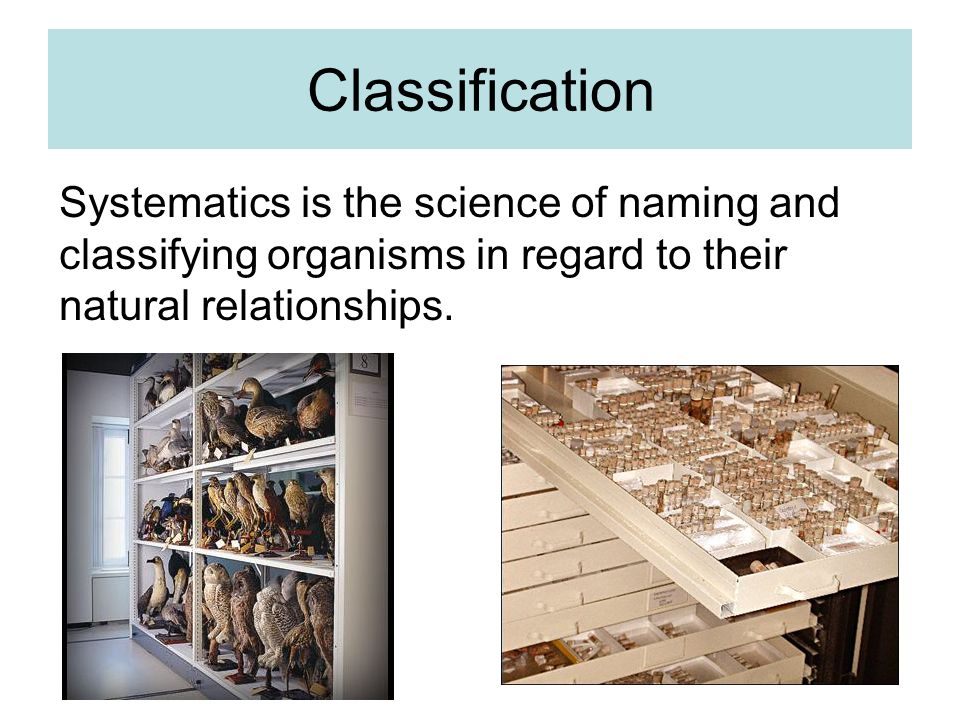 Classification Systematics is the science of naming and classifying organisms in regard to their natural relationships.