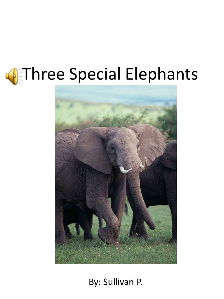 Three Special Elephants By: Sullivan By: Sullivan P.