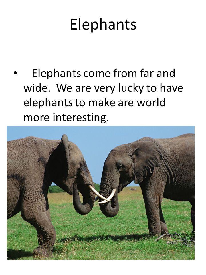Elephants Elephants come from far and wide.