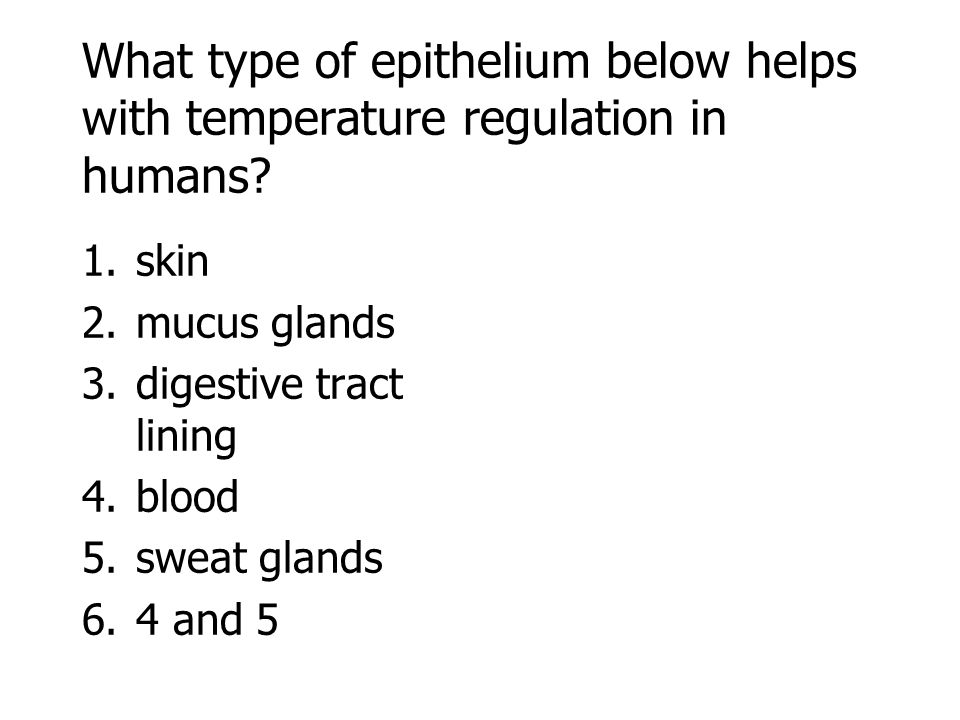 What type of epithelium below helps with temperature regulation in humans? 1.skin 2.mucus glands 3.digestive tract lining 4.blood 5.sweat glands 6.4 a