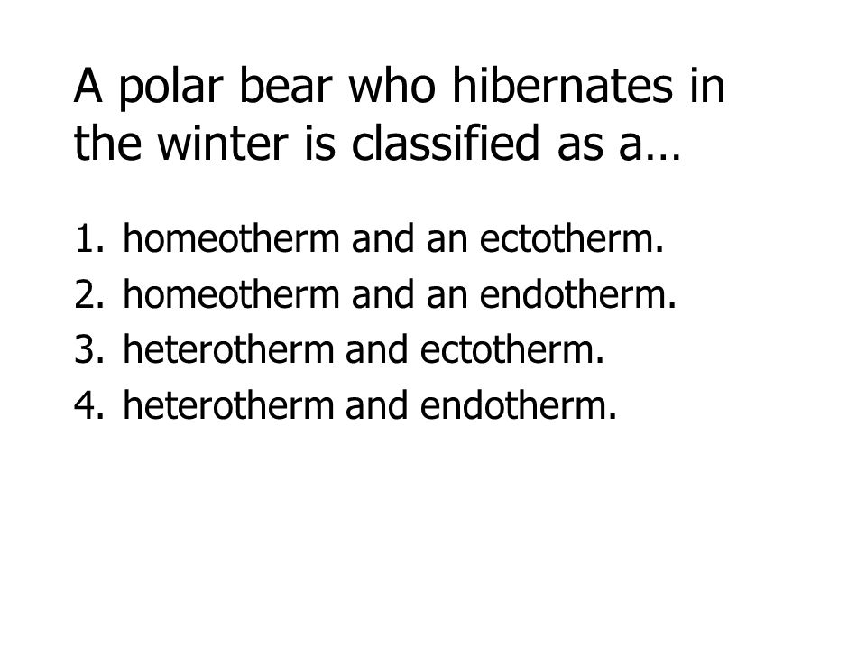 A polar bear who hibernates in the winter is classified as a… 1.homeotherm and an ectotherm.