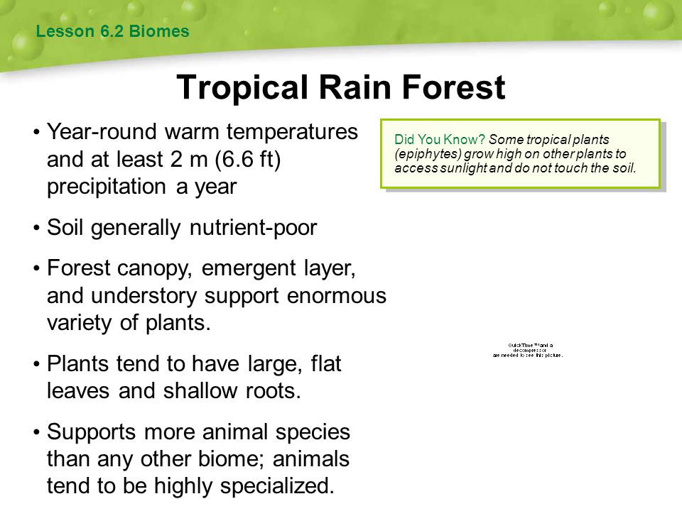 Tropical Dry Forest Lesson 6.2 Biomes Warm year-round, but rainfall highly seasonal Most trees are deciduous—they lose their leaves and cease photosynthesis part of the year.
