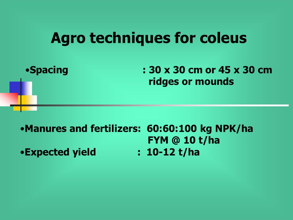 Agro techniques for coleus Spacing: 30 x 30 cm or 45 x 30 cm ridges or mounds Manures and fertilizers: 60:60:100 kg NPK/ha FYM @ 10 t/ha Expected yield: 10-12 t/ha