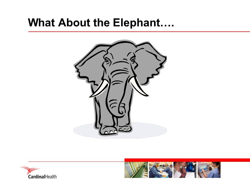 What About the Elephant….