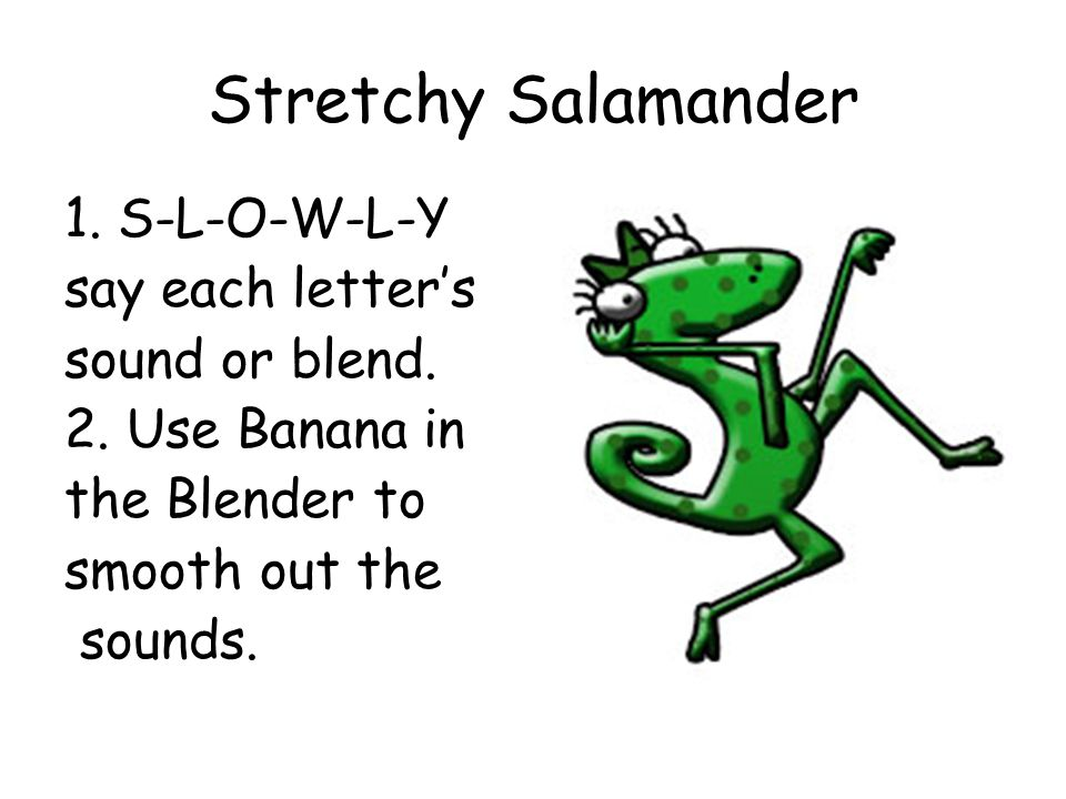 Stretchy Salamander 1. S-L-O-W-L-Y say each letter's sound or blend. 2. Use Banana in the Blender to smooth out the sounds.