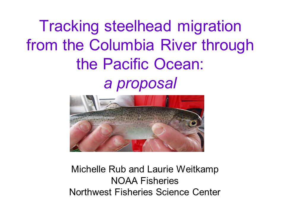 Tracking steelhead migration from the Columbia River through the Pacific Ocean: a proposal Michelle Rub and Laurie Weitkamp NOAA Fisheries Northwest F