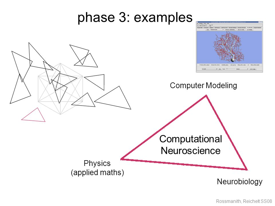 Rossmanith, Reichelt SS08 phase 3: examples Computational Neuroscience Computer Modeling Physics (applied maths) Neurobiology