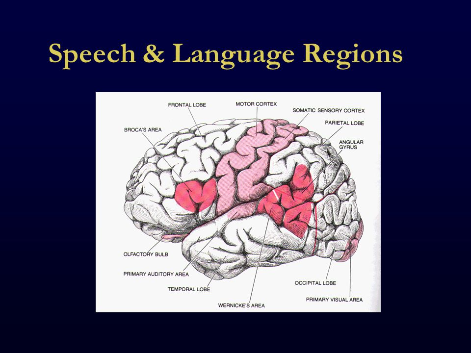 Speech & Language Regions