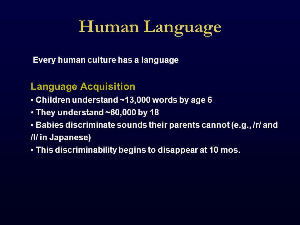 Human Language Innateness In 1959, Noam Chomsky postulated an innate neural circuitry dedicated to language.