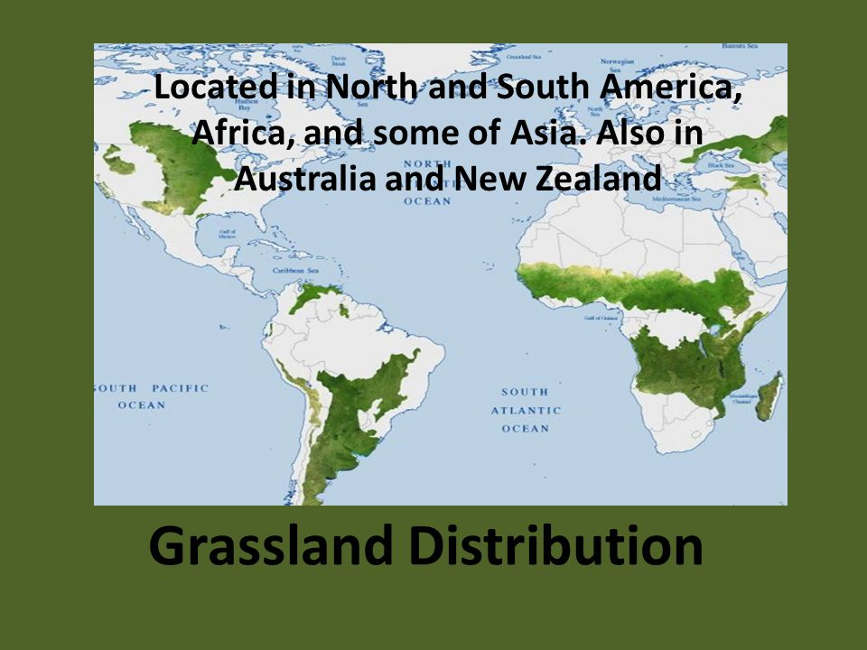Grassland Distribution Located in North and South America, Africa, and some of Asia.