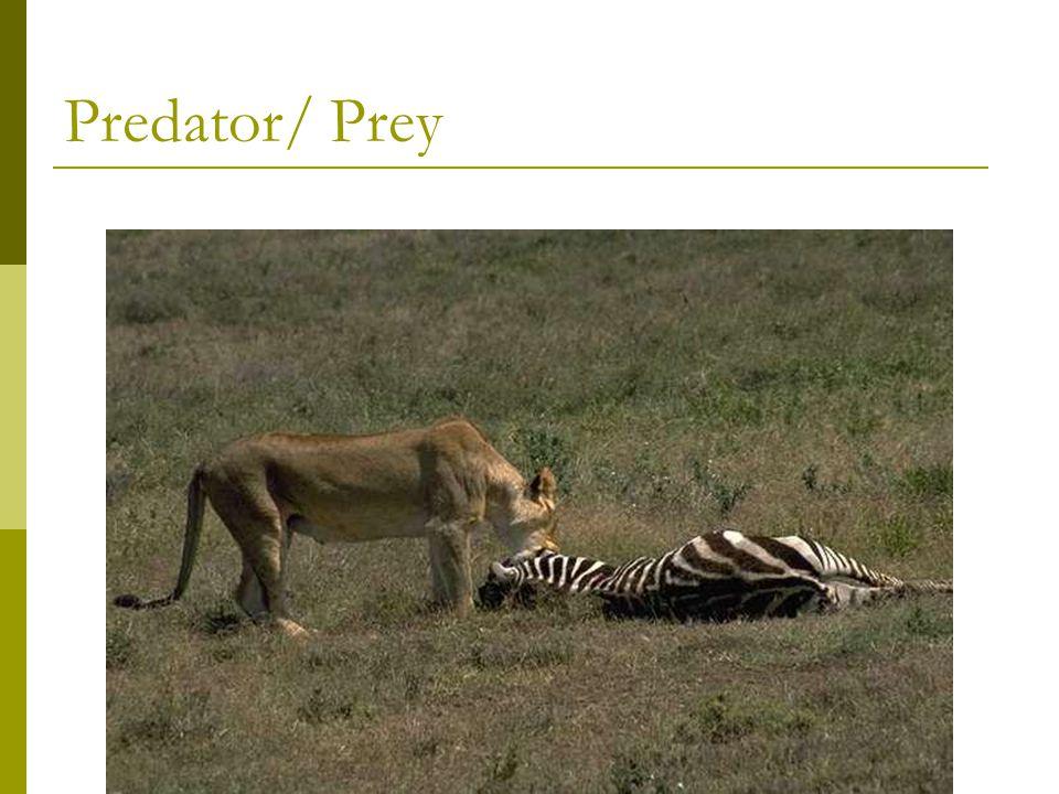 Predator/ Prey