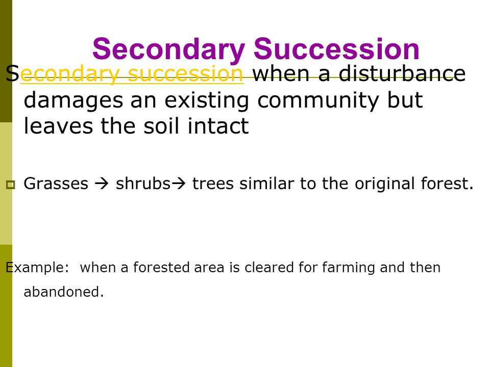Secondary Succession Secondary succession when a disturbance damages an existing community but leaves the soil intactecondary succession  Grasses  s