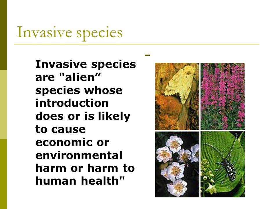 Invasive species  Invasive species are alien species whose introduction does or is likely to cause economic or environmental harm or harm to human health