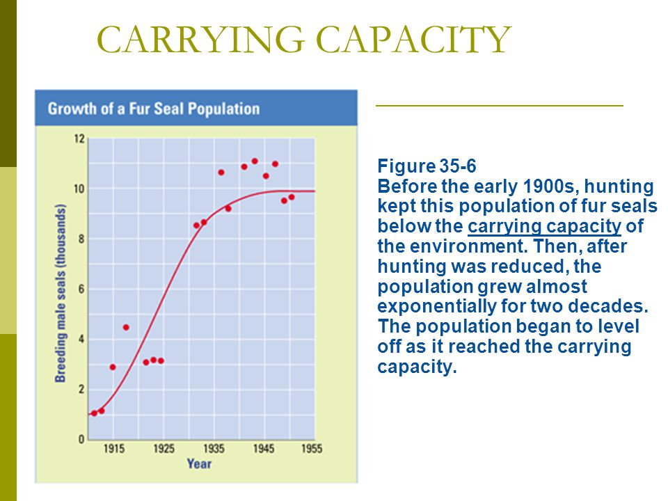 CARRYING CAPACITY  Figure 35-6 Before the early 1900s, hunting kept this population of fur seals below the carrying capacity of the environment. Then