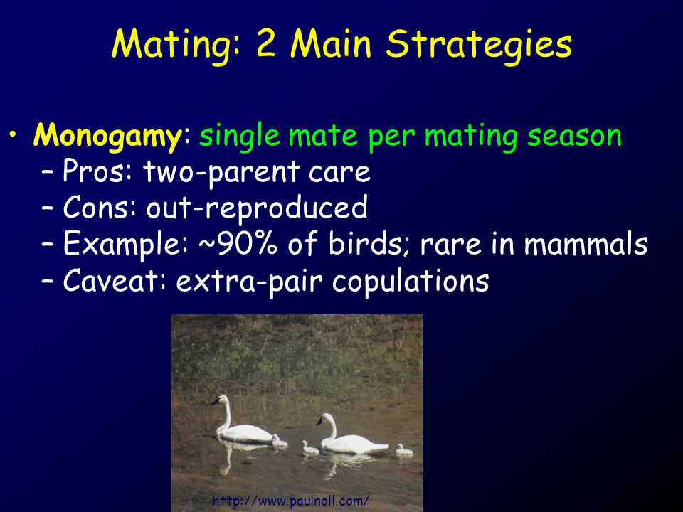 Mating: 2 Main Strategies Monogamy: single mate per mating season –Pros: two-parent care –Cons: out-reproduced –Example: ~90% of birds; rare in mammal