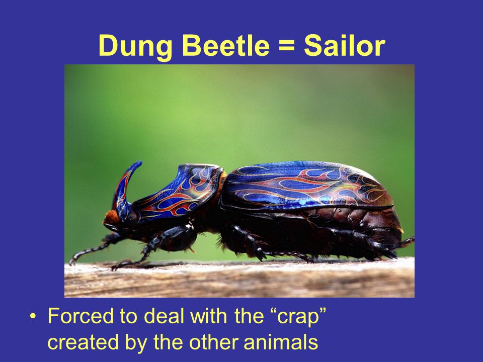"Dung Beetle = Sailor Forced to deal with the ""crap"" created by the other animals"