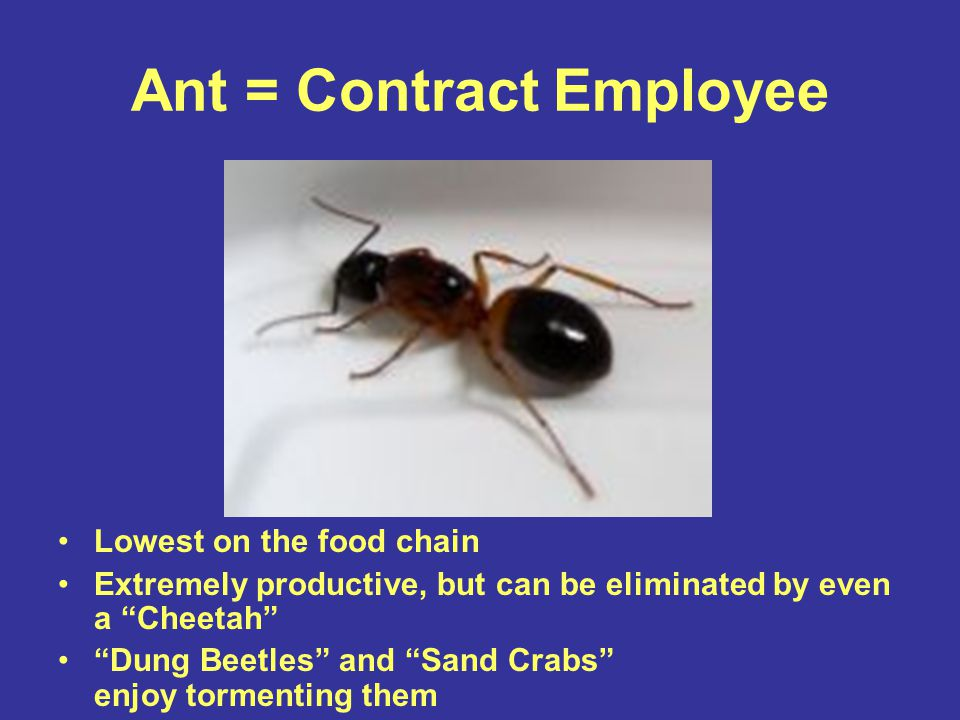 "Ant = Contract Employee Lowest on the food chain Extremely productive, but can be eliminated by even a ""Cheetah"" ""Dung Beetles"" and ""Sand Crabs"" enjoy"