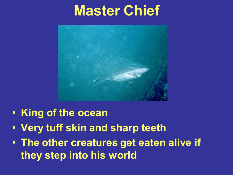 Master Chief King of the ocean Very tuff skin and sharp teeth The other creatures get eaten alive if they step into his world