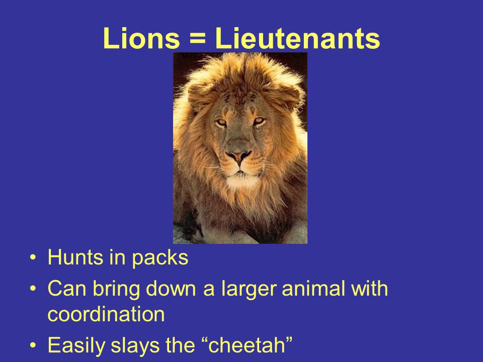 "Lions = Lieutenants Hunts in packs Can bring down a larger animal with coordination Easily slays the ""cheetah"""