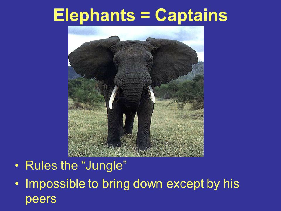 "Elephants = Captains Rules the ""Jungle"" Impossible to bring down except by his peers"