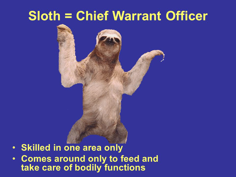 Sloth = Chief Warrant Officer Skilled in one area only Comes around only to feed and take care of bodily functions