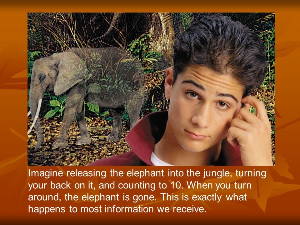 Imagine releasing the elephant into the jungle, turning your back on it, and counting to 10.