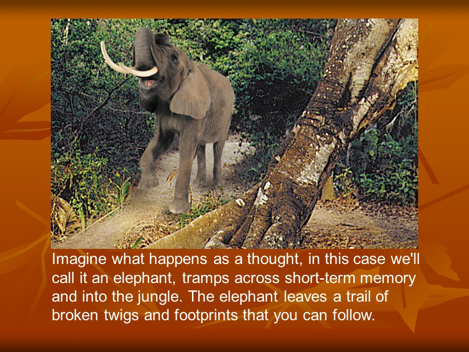 Imagine what happens as a thought, in this case we ll call it an elephant, tramps across short-term memory and into the jungle.
