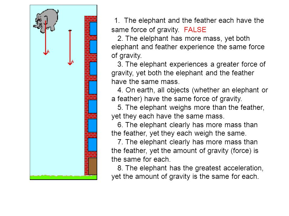 1. The elephant and the feather each have the same force of gravity.