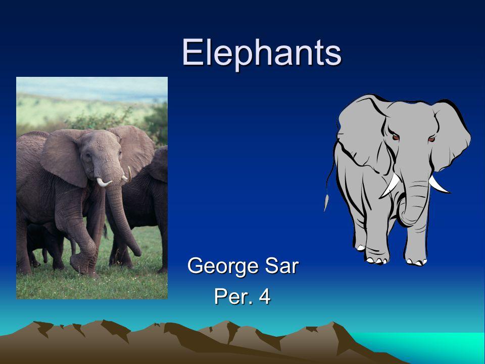 Elephants Elephants George Sar Per. 4