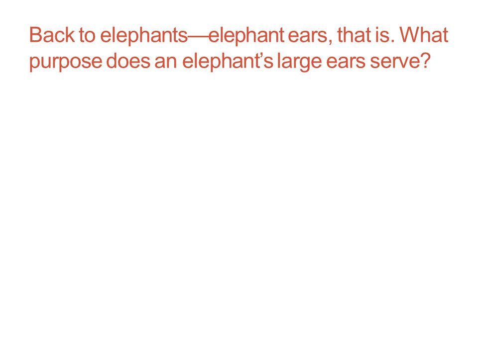 Back to elephants—elephant ears, that is. What purpose does an elephant's large ears serve?