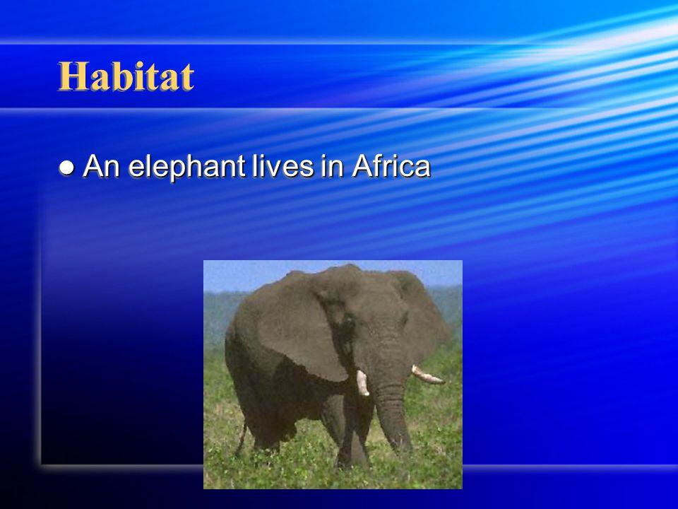 Elephants Elephants By Miranda Erickson