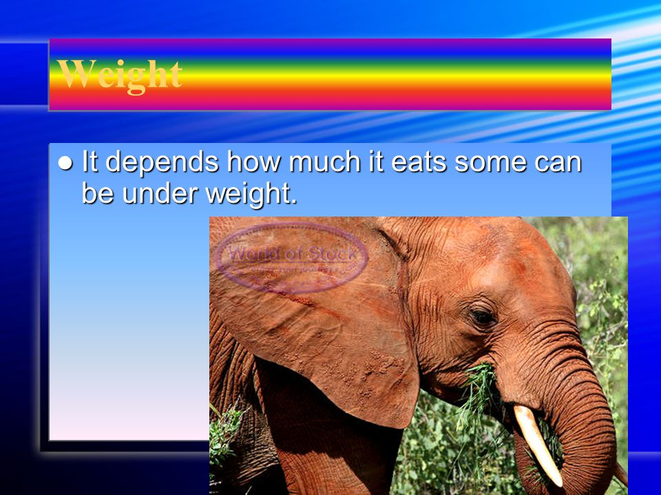 Habitat An elephant lives in Africa An elephant lives in Africa An elephant lives in Africa