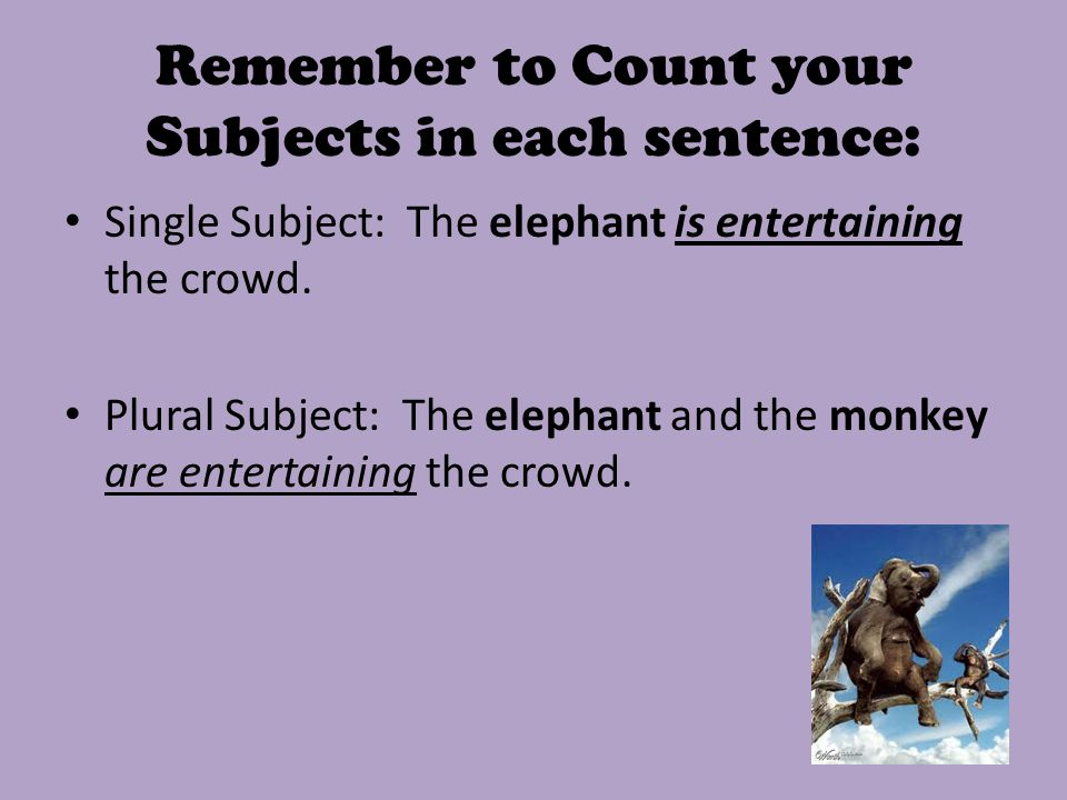 Remember to Count your Subjects in each sentence: Single Subject: The elephant is entertaining the crowd.