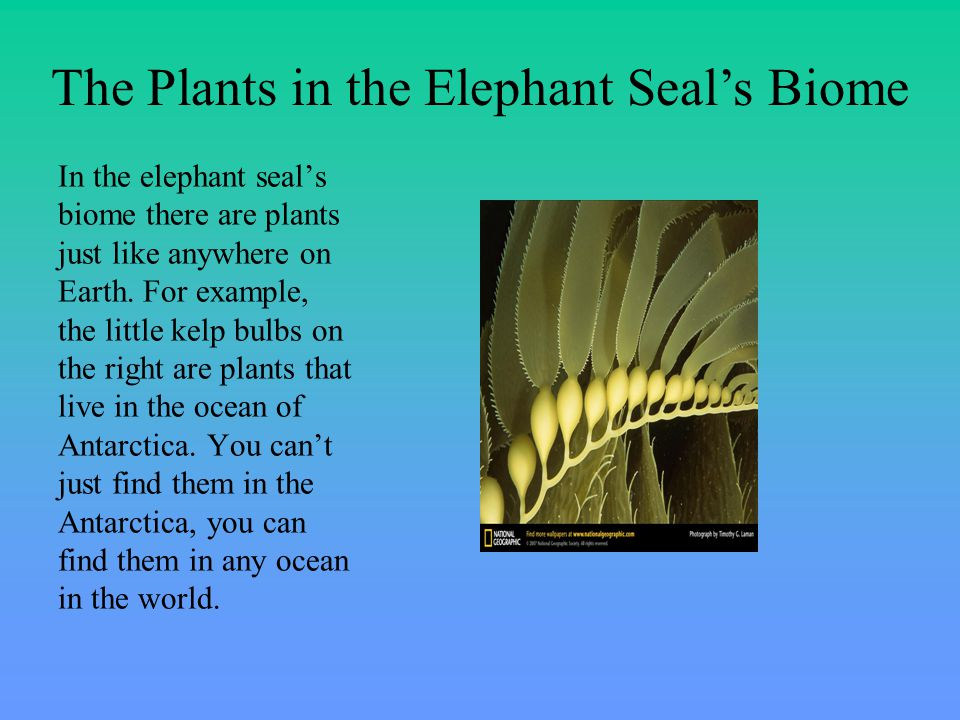 In the elephant seal's biome there are plants just like anywhere on Earth.