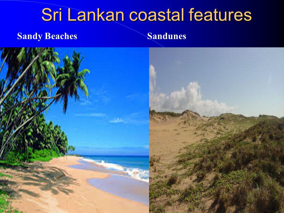 Sri Lankan coastal features Mangroves Salt Marsh