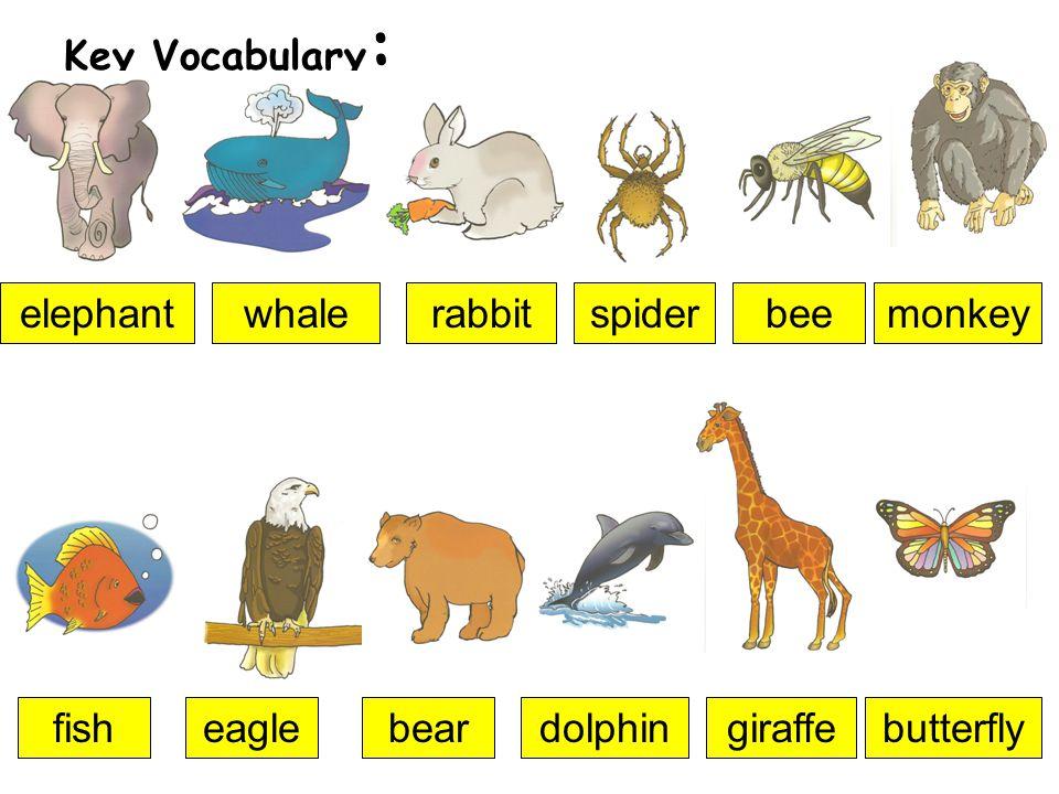 Key Vocabulary : elephantwhalerabbitspiderbeemonkey fisheaglebeardolphingiraffebutterfly